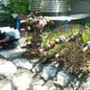 2011-05-26 12.57.57.jpg